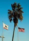 Bandeiras e palma fotografia de stock royalty free