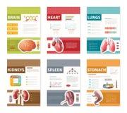 Bandeiras internas dos órgãos humanos Imagens de Stock