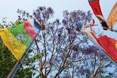 Bandeiras na frente do céu azul e das filiais de árvore Foto de Stock Royalty Free