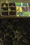 Bandeja da semente Imagem de Stock
