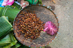 Bandeja de insectos del hedor, Laos Fotografía de archivo libre de regalías