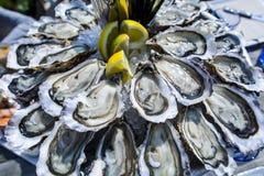 Bandeja de la ostra, Cap Ferret Fotos de archivo