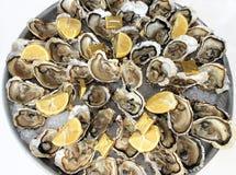 Bandeja de ostras frescas Imagens de Stock Royalty Free