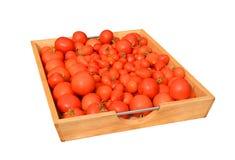 Bandeja de tomates maduros lavados Imagenes de archivo