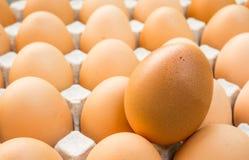Bandeja del huevo Imagen de archivo