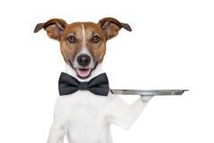 Bandeja del servicio del perro Fotografía de archivo
