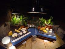 Bandeja deliciosa do queijo com ervas Fotografia de Stock Royalty Free