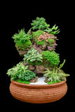 Bandeja do jardim de cacto no potenciômetro Imagens de Stock Royalty Free