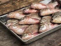 Bandeja do metal com os vários peixes frescos do rio Fotos de Stock Royalty Free