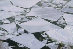 Bandejas de gelo na baía Fotos de Stock Royalty Free