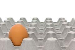 Bandejas do ovo da galinha Imagens de Stock