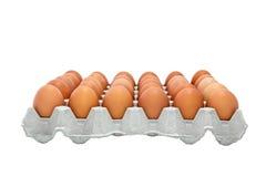 Bandejas do ovo da galinha Foto de Stock
