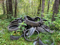 Banden in het bos stock afbeeldingen