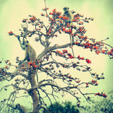 Bander-2. Monkey on the tree  in vintage style Royalty Free Stock Image