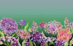 Bandera ancha del verano colorido El iberis vivo florece con las hojas verdes en fondo del verde de la pendiente Plantilla horizo libre illustration