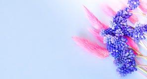 Bandera azul del color con las flores azules y las espiguillas rosadas imagenes de archivo
