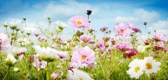 Bandera bonita de la primavera con las flores rosadas y blancas fotografía de archivo