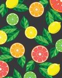 Bandera brillante con las frutas tropicales libre illustration