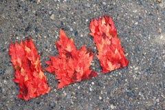 Bandera canadiense de hojas Foto de archivo libre de regalías