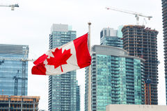 Bandera canadiense delante de edificios modernos del paisaje urbano hermoso de la ciudad Imagen de archivo libre de regalías