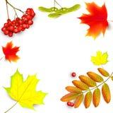 Bandera con las hojas de otoño del arce Imagen de archivo