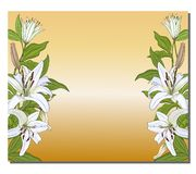 Bandera con una frontera vertical de los lirios blancos en un fondo del oro Vector libre illustration