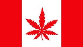 Bandera de Canadá con la hoja de la mala hierba de la marijuana stock de ilustración