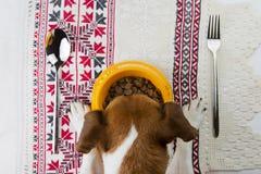 Bandera de la comida de perro Fotografía de archivo