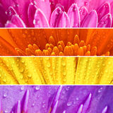 Bandera de la flor fresca Imagen de archivo libre de regalías