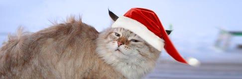 Bandera de la Navidad, gato santa Foto de archivo