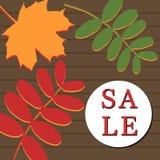 Bandera de la venta del otoño con el serbal y la hoja de arce ilustración del vector