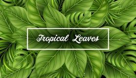 Bandera de la venta del verano con las hojas tropicales para el fondo promotionTropical de las hojas con las plantas de la selva Fotografía de archivo libre de regalías