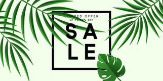 Bandera de la venta del verano Diseño tropical del vector de las hojas del cartel Imágenes de archivo libres de regalías