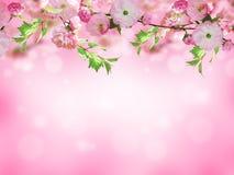 Bandera de las flores Background Imágenes de archivo libres de regalías