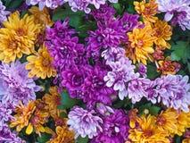Bandera de las flores Background imagenes de archivo