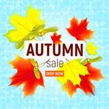 Bandera de las ventas con las hojas de otoño del arce Imagenes de archivo