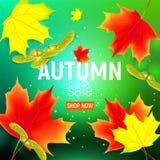 Bandera de las ventas con las hojas de otoño del arce Imágenes de archivo libres de regalías