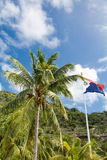 Bandera de St Maarten con la palmera imagenes de archivo