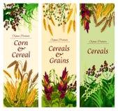 Bandera del cereal, del grano y de la verdura de la comida sana ilustración del vector