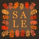 Bandera del cuadrado de la venta del otoño con la hoja del serbal Marco de hojas stock de ilustración