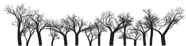 Bandera del fondo de los árboles ilustración del vector