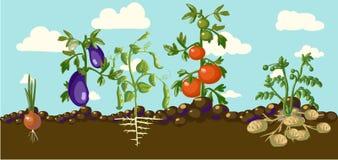 Bandera del jardín del vintage con veggies de la raíz Fotografía de archivo libre de regalías