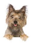 Bandera del perro fotografía de archivo libre de regalías