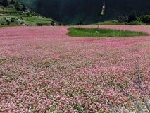 Bandera del rezo en un campo rosado del alforfón Imagen de archivo