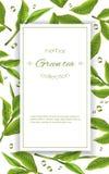 Bandera del té verde Foto de archivo libre de regalías