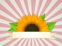 Bandera del verano Imágenes de archivo libres de regalías