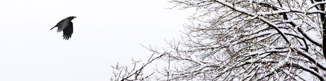 Bandera horizontal de un invierno frío y nevoso fotos de archivo