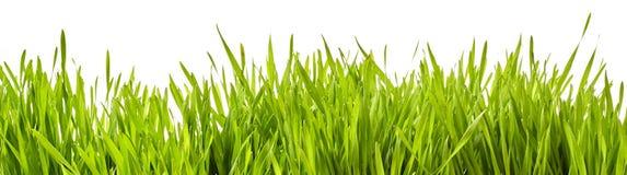 Bandera panorámica de la hierba verde fresca de la primavera fotos de archivo