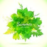 Bandera pintada acuarela verde del follaje del verano libre illustration