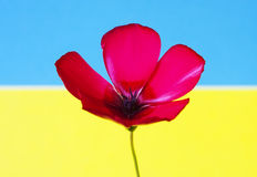 Bandera roja de la flor foto de archivo